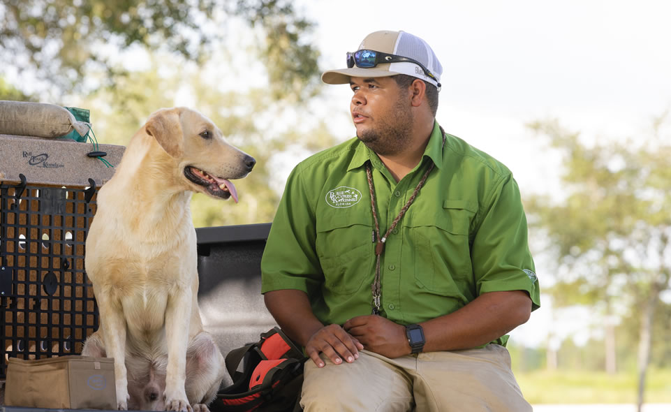 Dog trainer with British Labrador Retriever